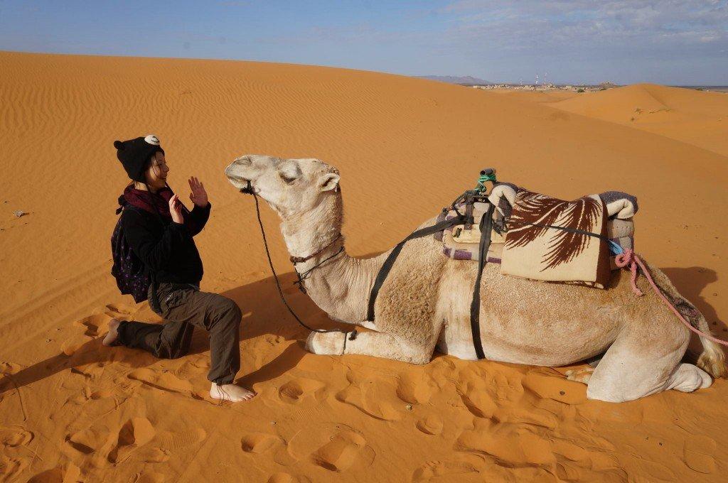 杜拜 dubai camel 駱駝 desert safari