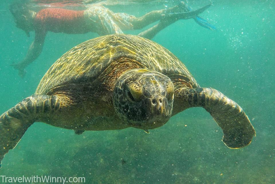 Sea turtle 海龜 浮潛
