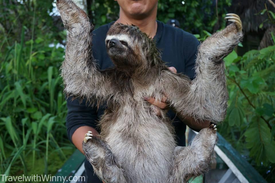 樹懶 sloth