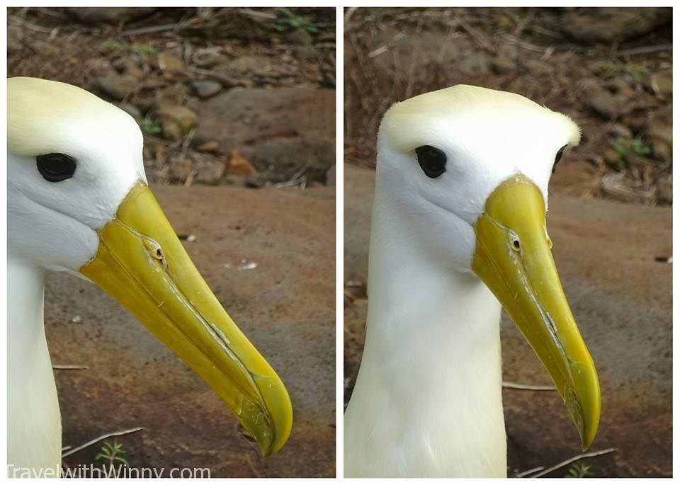 albatross 信天翁