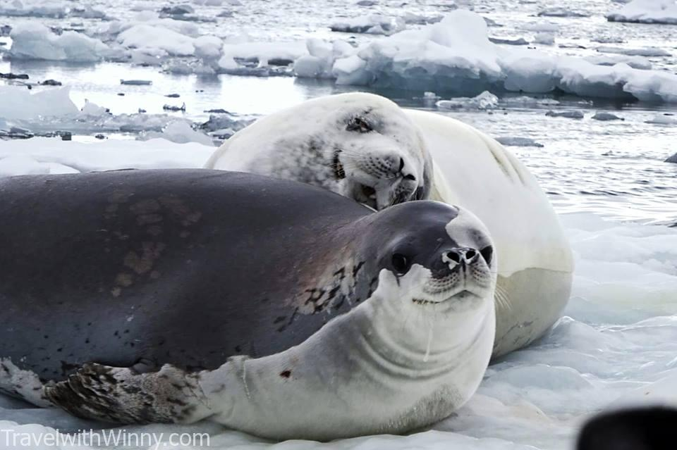 海豹 浮冰 ice berg seal 南極 antarctica