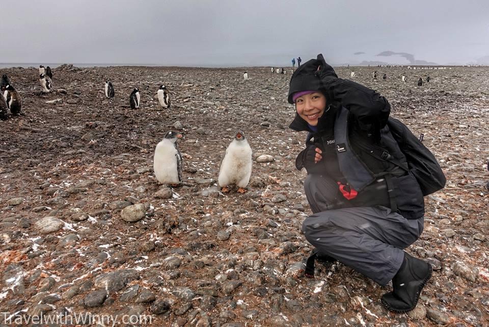 南極 企鵝 antarctica penguin