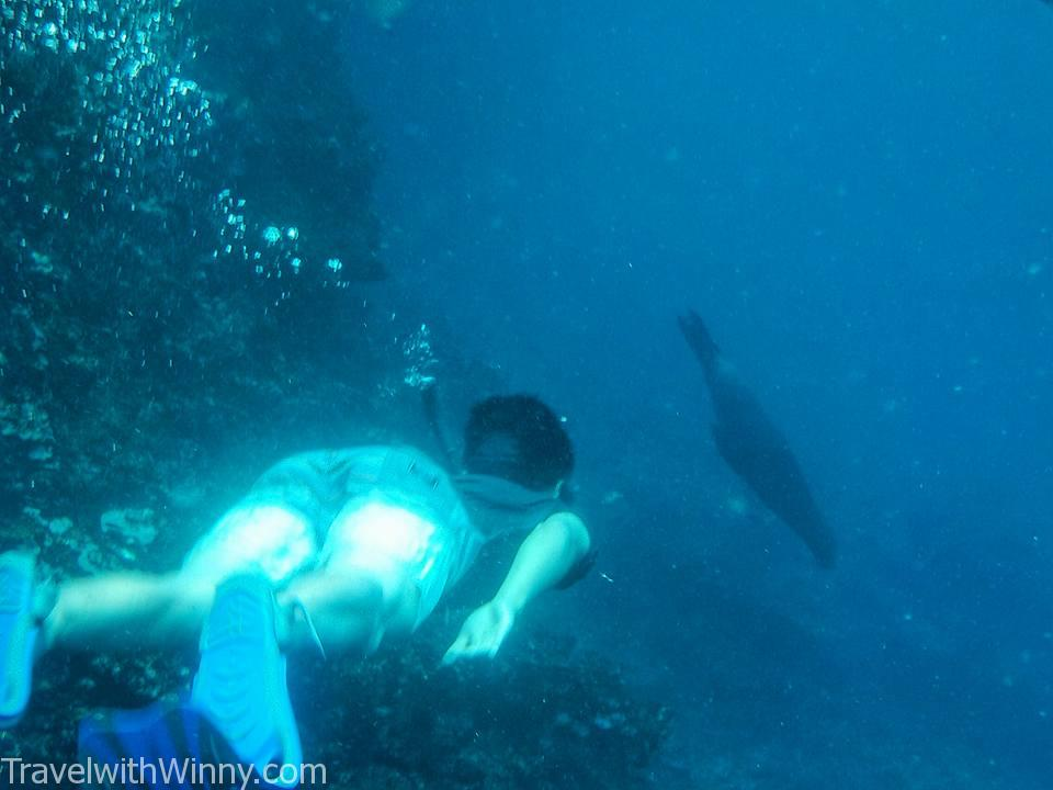 diving with sea lion 海獅