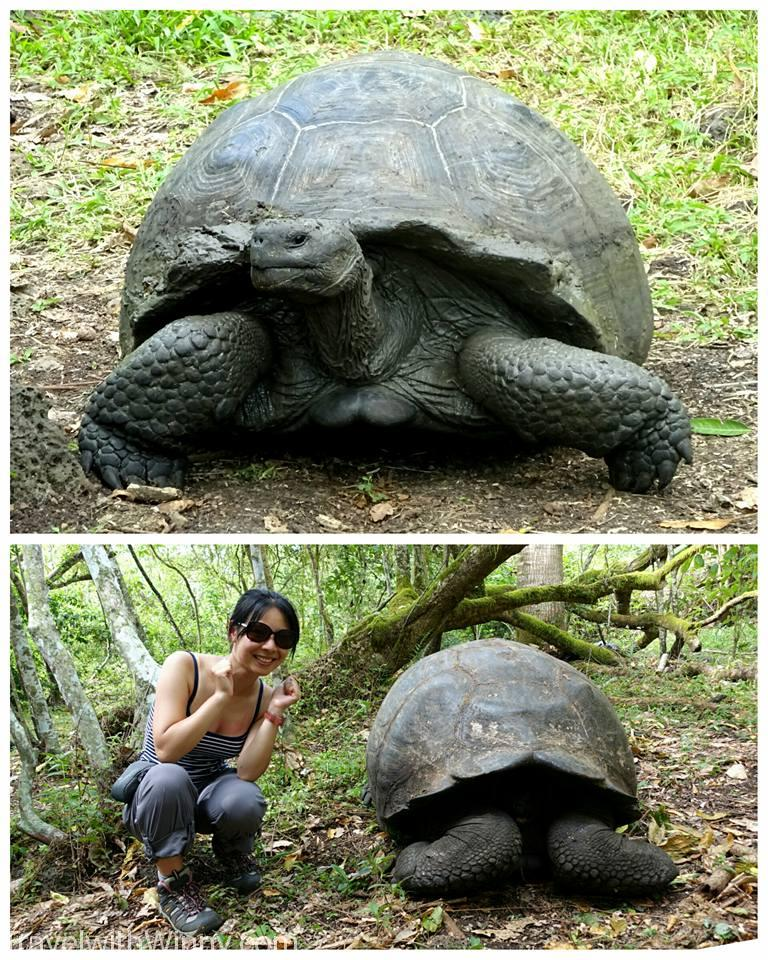 Seeing the Galapagos tortoises in its natural habitat is only USD$30 return Taxi ride away.