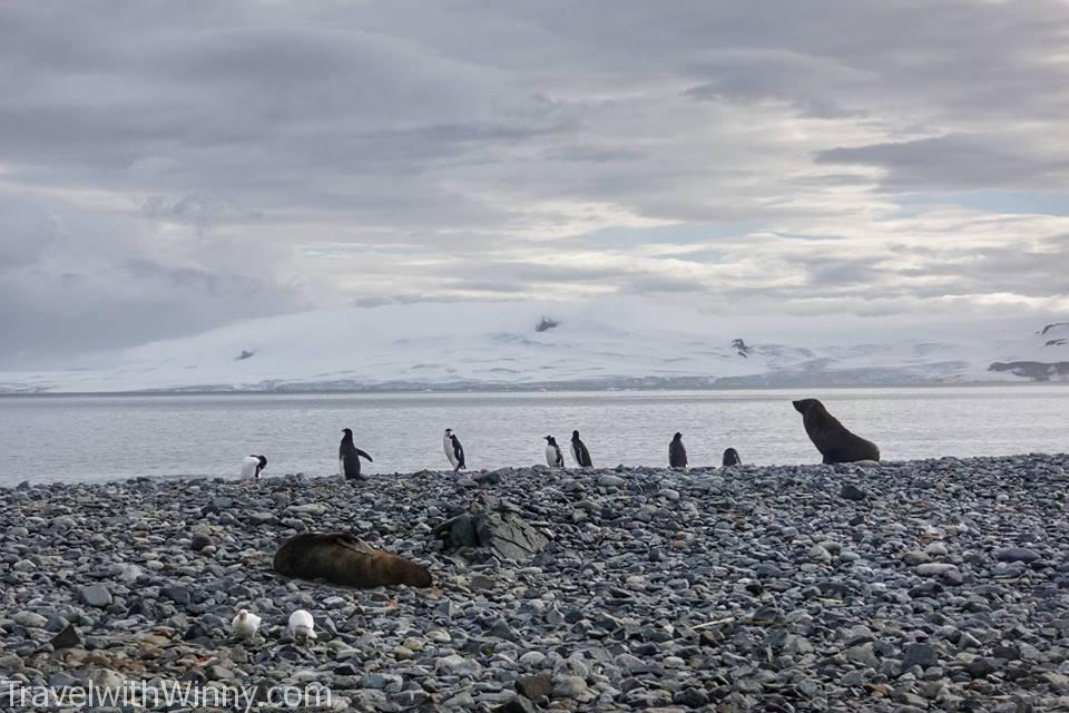 這邊的企鵝跟海豹居然很和平的共處呢!