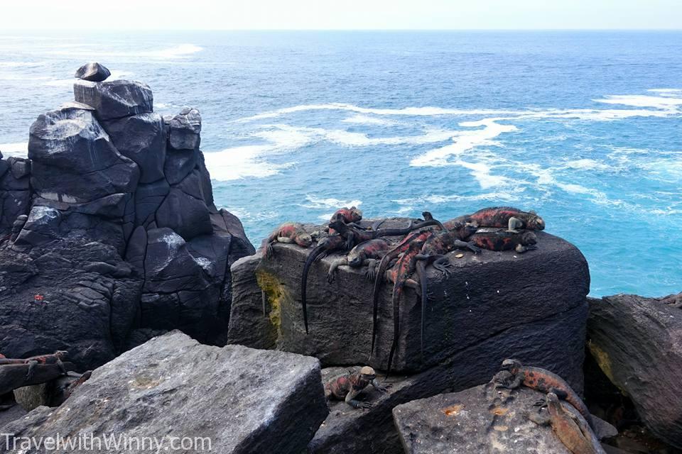 Marine Iguana 加拉帕戈斯海鬣蜥