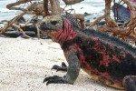 【厄瓜多】以達爾文進化論聞名的 加拉巴哥群島 Galapagos Islands:四天三夜 Last-Minute Cruise 與鯊魚,海獅,海龜浮潛&稀有動物體驗記!