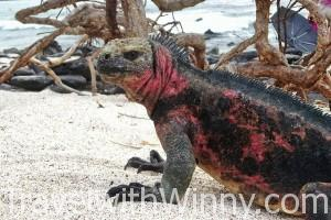 Cruise vs Island Hopping in Galapagos Islands