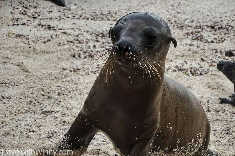 海獅寶寶 sea lion baby