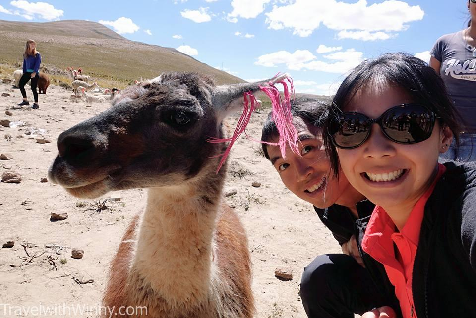 alpaca llama 駱馬
