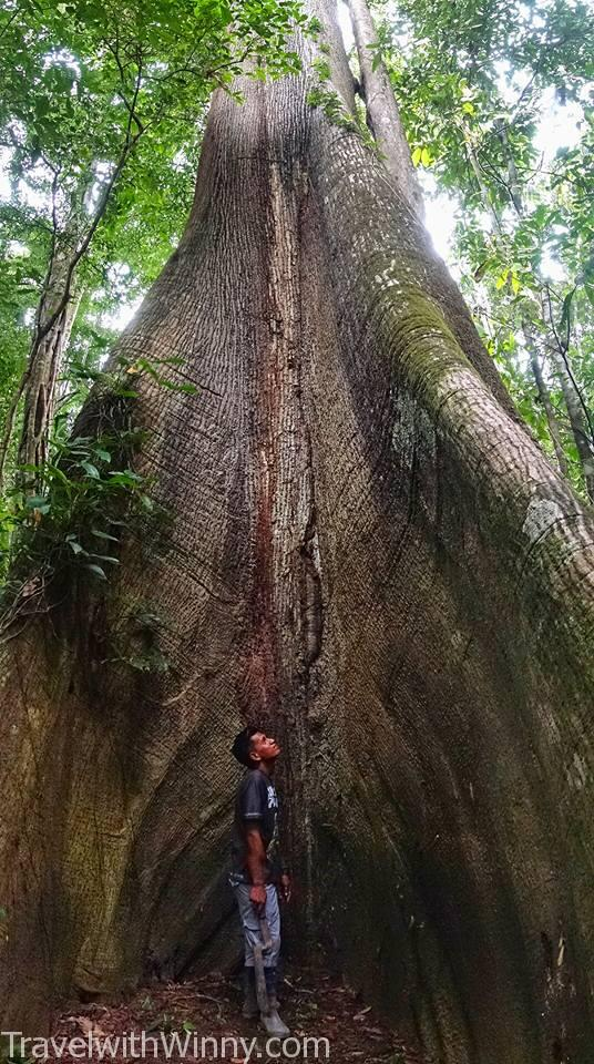 亞馬遜雨林 amazon jungle