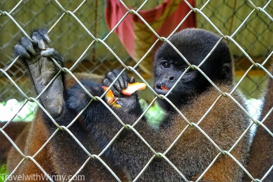 猴子王 monkey king
