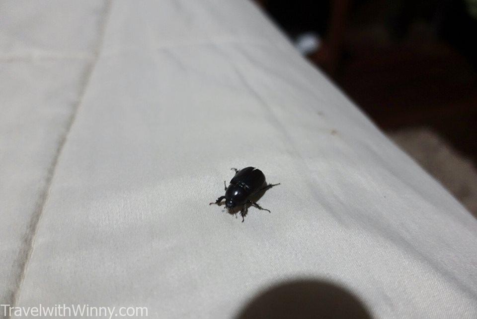 beatles 甲蟲