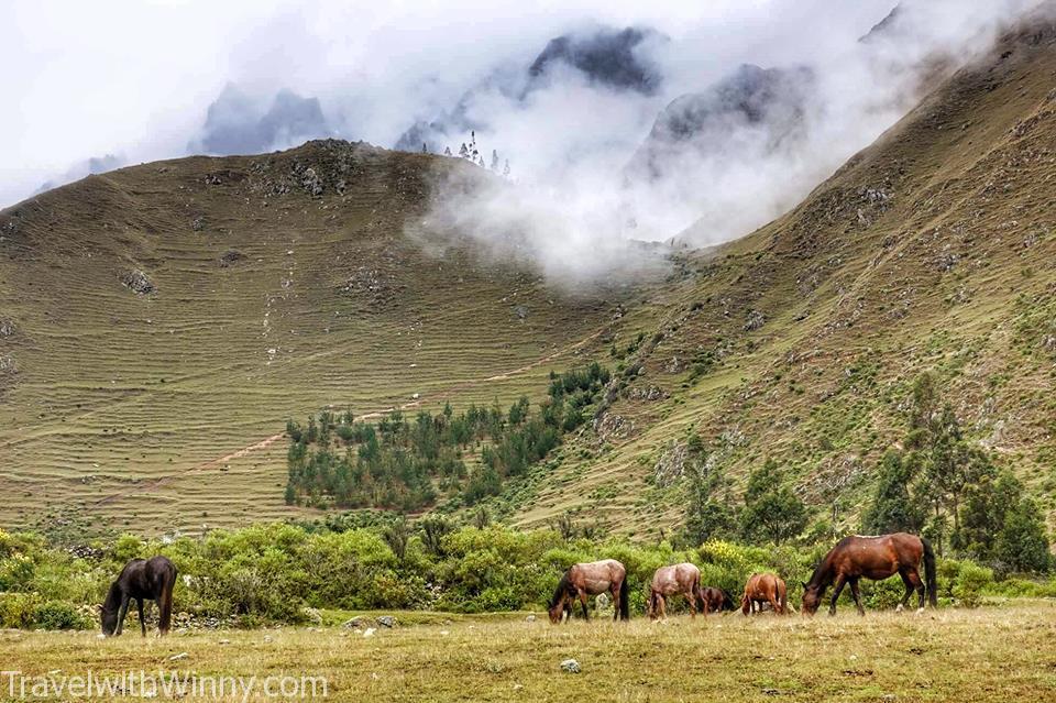 高山馬 highland horse Classic inca trail