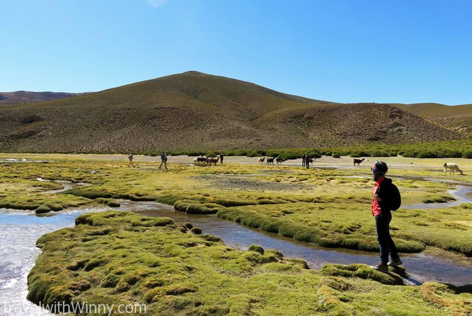 wetlands highlands 高原 駱馬 找自己