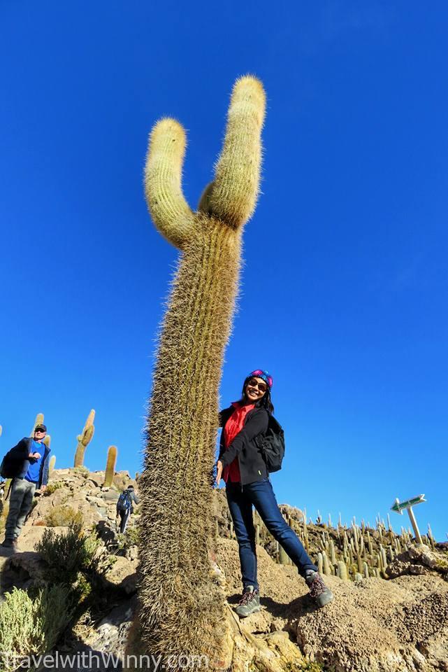 Isla Incahuasi 仙人掌 Cactus