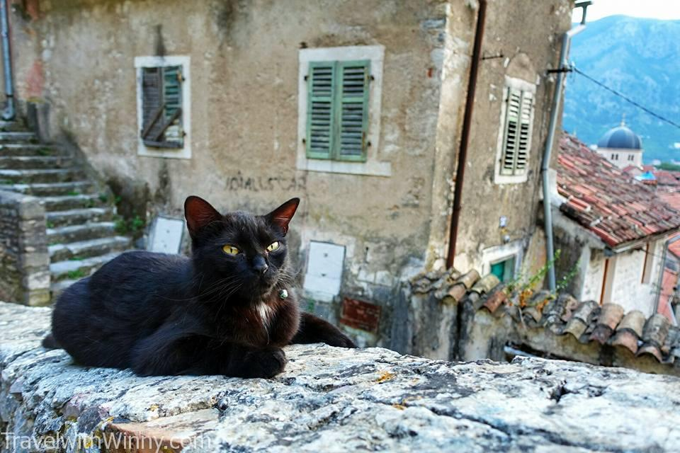 Kotor fortress walls, Kotor cat