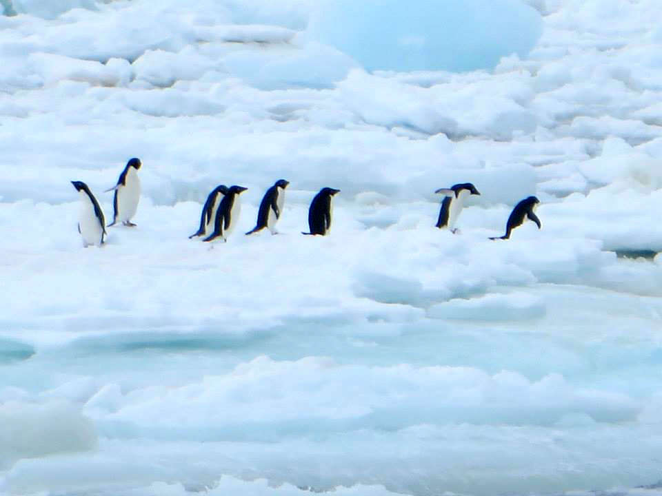 Antarctica penguins 南極 企鵝