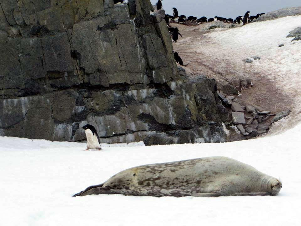 Antarctica penguins 南極 企鵝