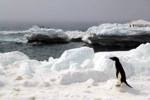 How to book Last Minute Antarctica Cruises?