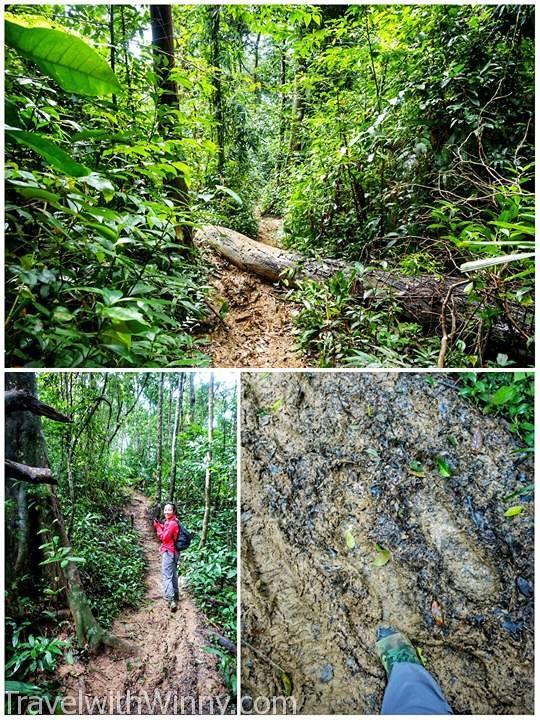 vietnam jungle 越南叢林