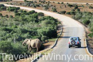 【南非】大象擋路驚魂記!小車自駕 Addo Elephant Park 阿多大象國家公園