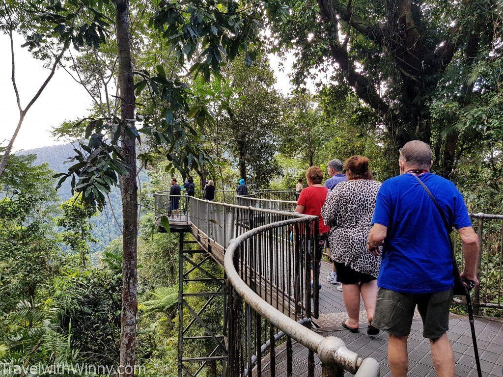 瑪姆雨林天空步道 Mamu Tropical Skywalk