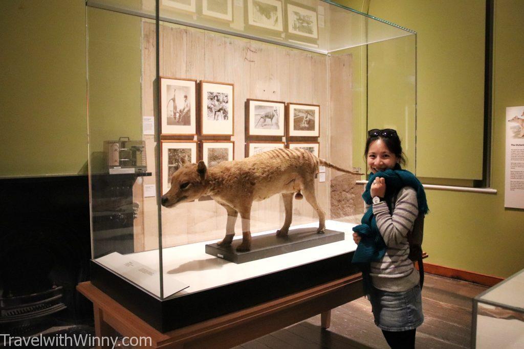 袋狼 Thylacine 塔斯馬尼亞虎 Tasmanian Tigers
