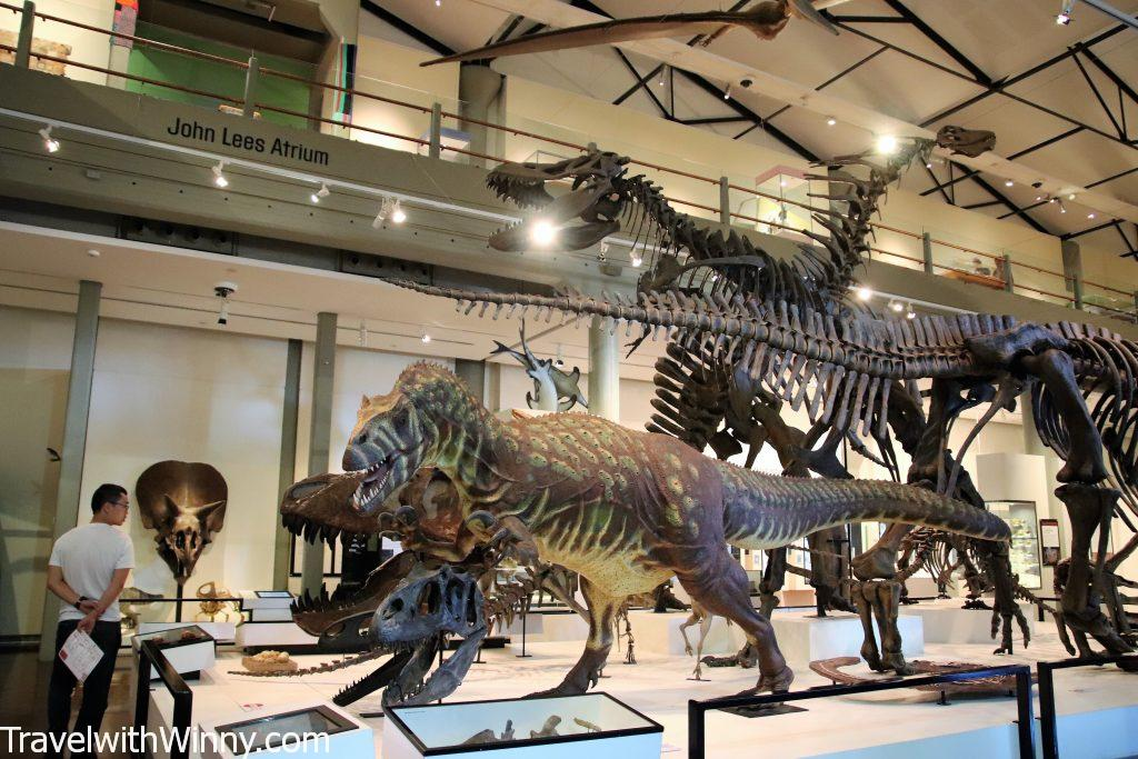 dinosaur skeleton exhibition 恐龍 展示 骨頭