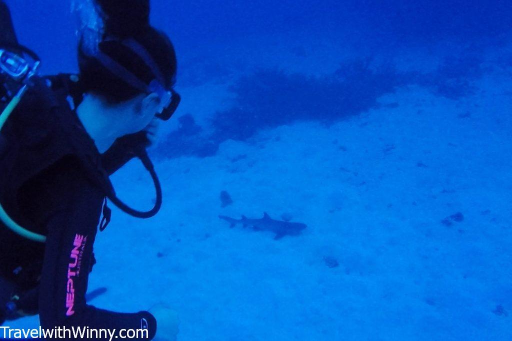 鯊魚 sleeping shark