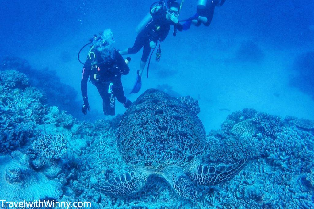 cairns sea turtle great barrier reef nemo 海底總動員 海龜 大堡礁 潛水