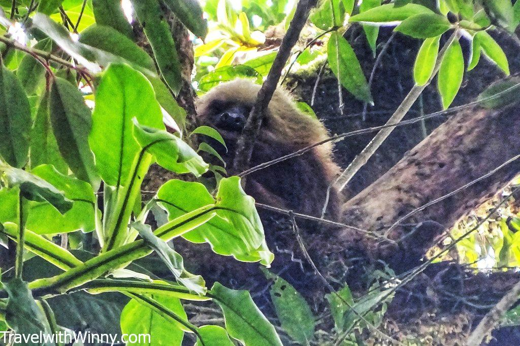 backpacking in Central America sloth