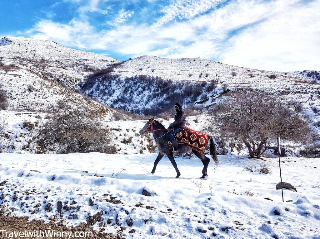 kyrgyz horses 吉爾吉斯 馬