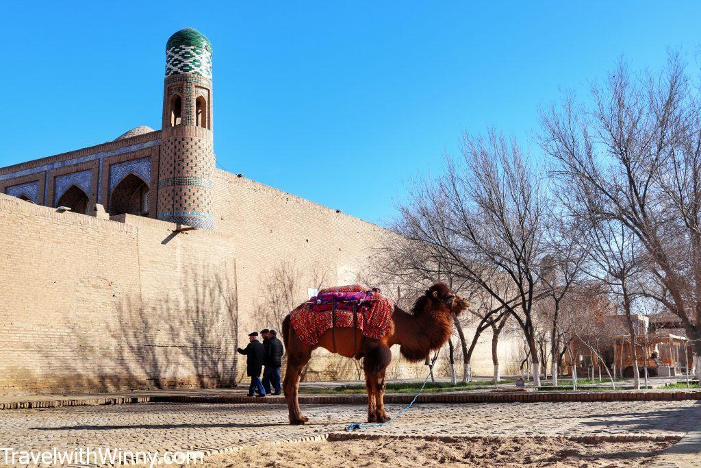 單峰駱駝 single hump camel