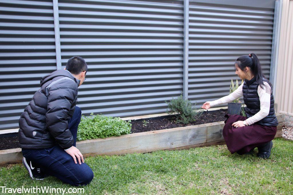 herb garden 植物