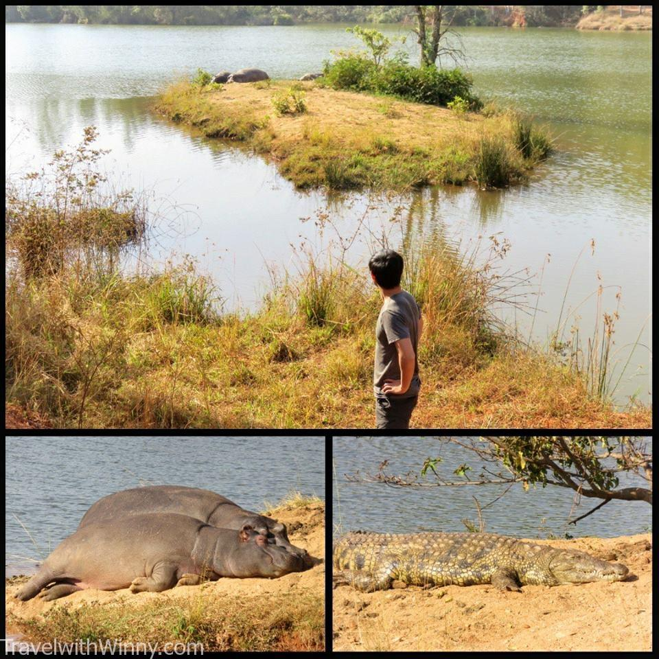 hippo 河馬