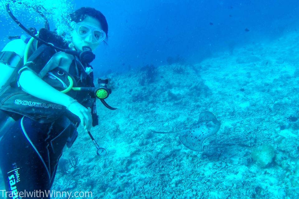 刺魟 Stingray 馬爾地夫 潛水 diving maldives