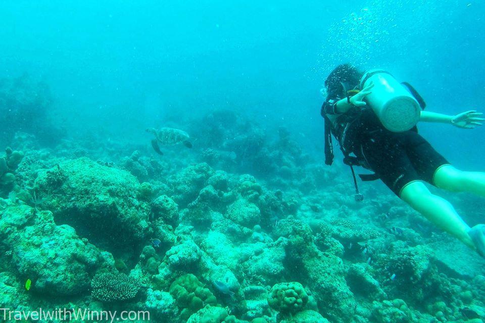 diving turtle 潛水 海龜