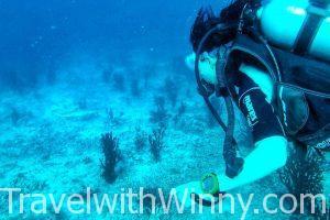 潛水 鯊魚 diving shark