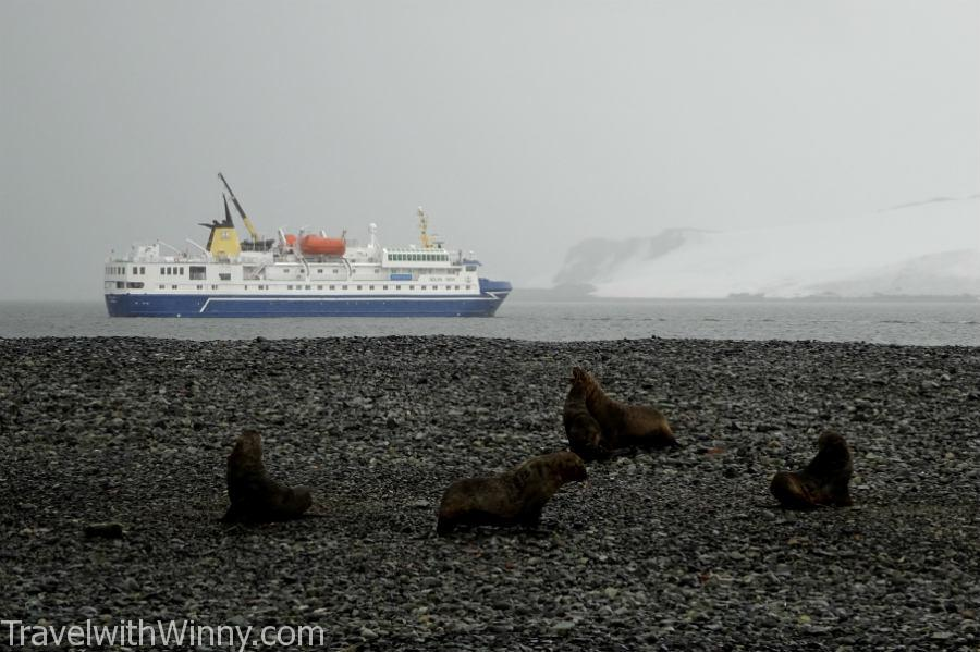 海豹 seal