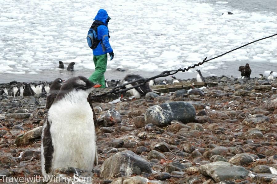 BABY PENGUIN 企鵝