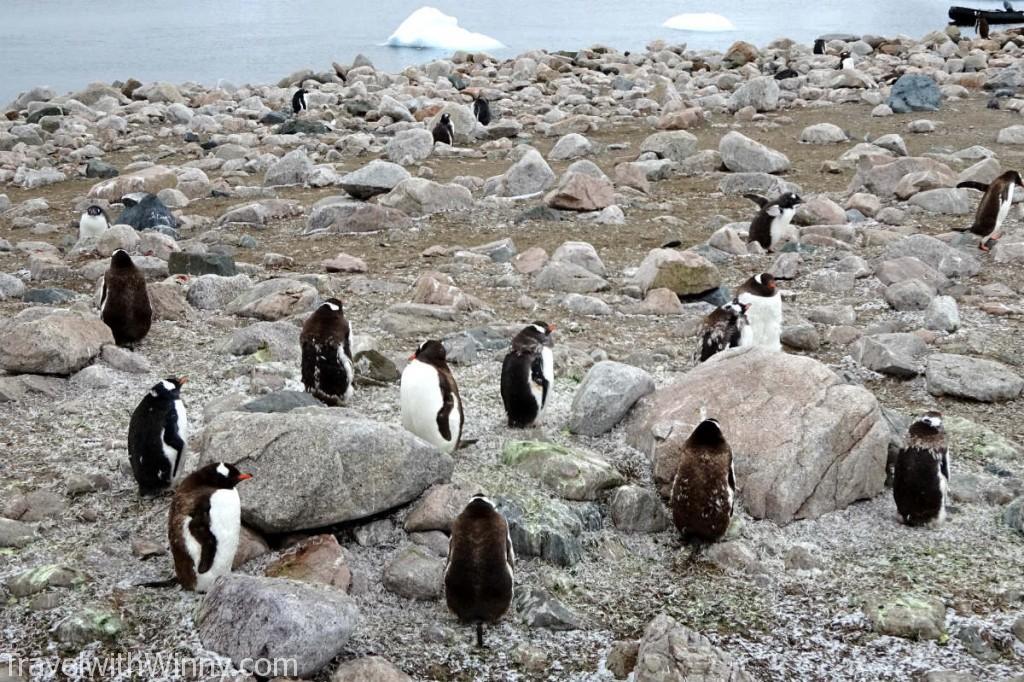 南極 antarctica