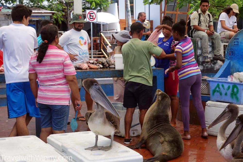 【環遊世界第八站】以達爾文進化論聞名的 加拉巴哥群島Galapagos Islands:四天三夜Last-Minute Cruise與鯊魚,海獅,海龜浮潛&稀有動物體驗記
