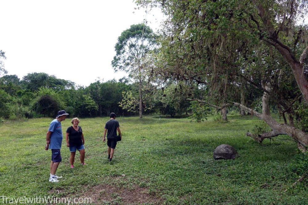 Galápagos tortoise 加拉巴哥象龜