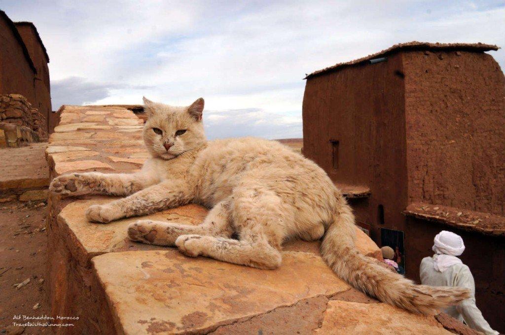 morocco cats 摩洛哥 貓咪