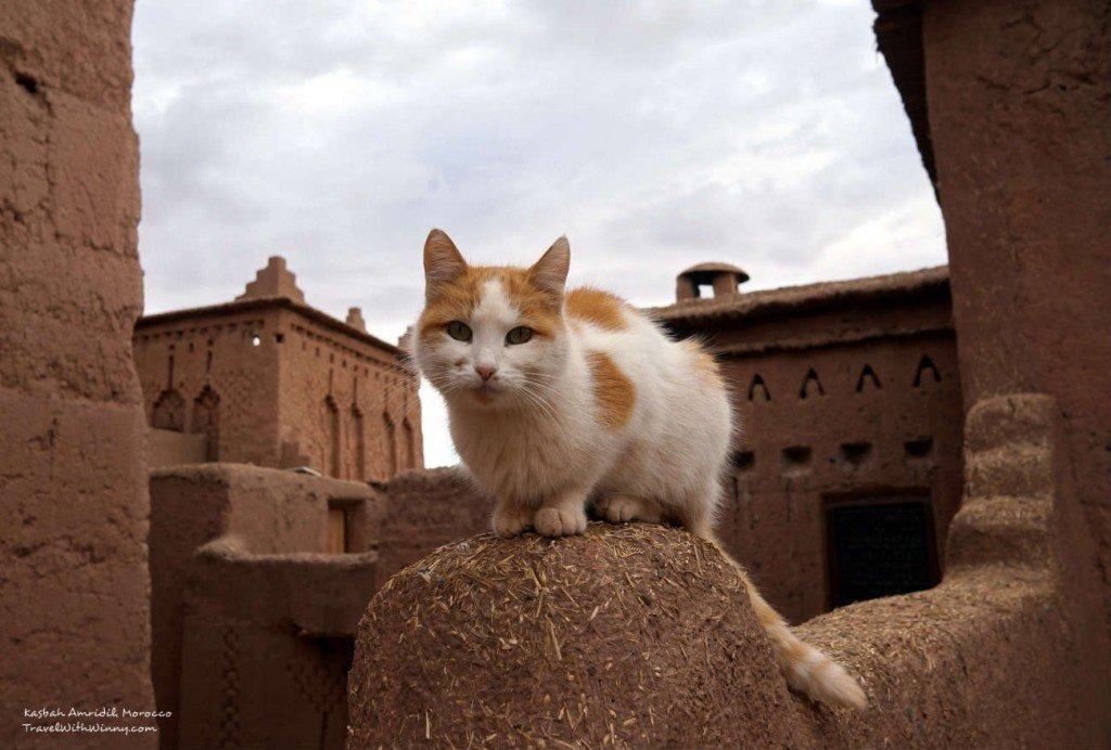 cat 貓