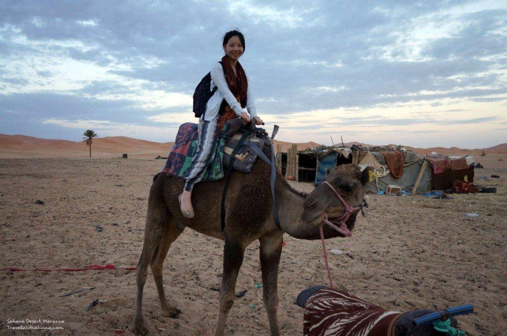 撒哈拉沙漠 駱駝 sahara camel
