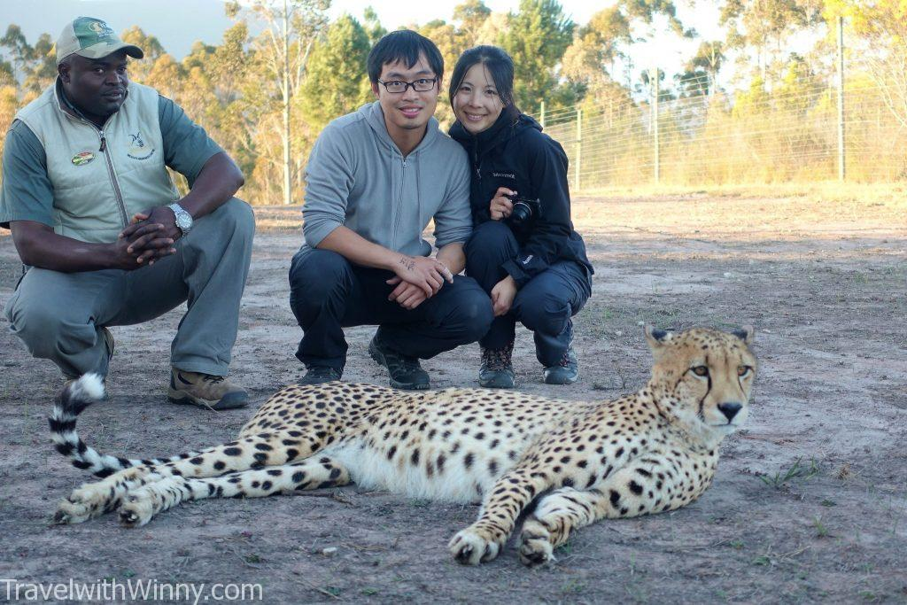 walking with cheetah 獵豹 散步 南非 south africa