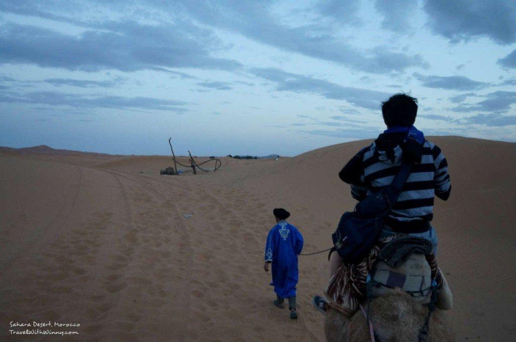 撒哈拉沙漠 旅行 sahara camel
