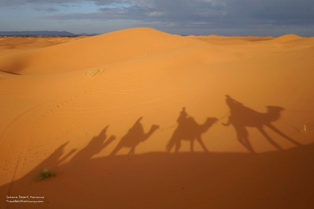 camel 駱駝 沙漠